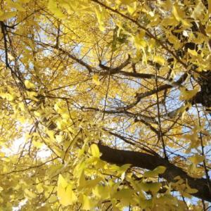 葉も実も落ちることを躊躇しない