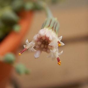 小さな花が咲き出してきています。