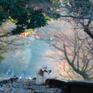 そうだ!秋の京都に行こう♪①