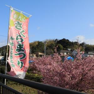 浜松の河津桜❀✿