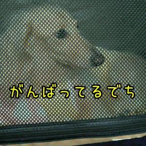 カキカキ & 愛おしいプルプル(術後3週間)