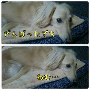 お薬Day & 夜はパパっ子(動画)