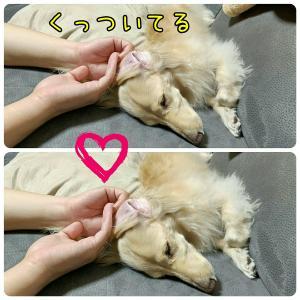 愛犬をベッドに誘ってみたら【動画】 & 幸せの図