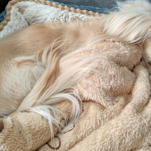 天使のようは寝顔