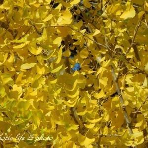 ランチと黄葉と♪