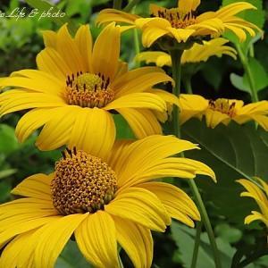 太陽が恋しい花☆名札の工夫
