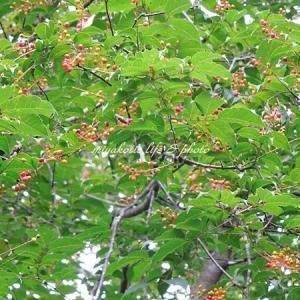 森の実&ブッドレア&枝豆