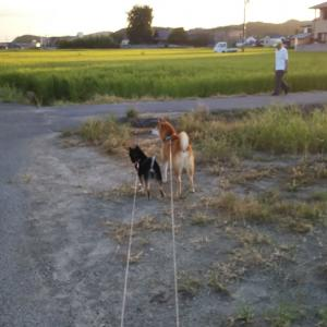 猫と犬が居る生活