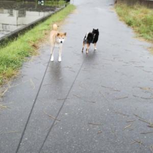 梅雨時期のお散歩は