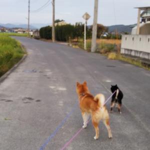 ちょっと気温が下がって元気に朝散歩