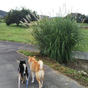 愛犬とのんびり秋散歩