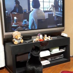 ルビー、ドラマ大好き