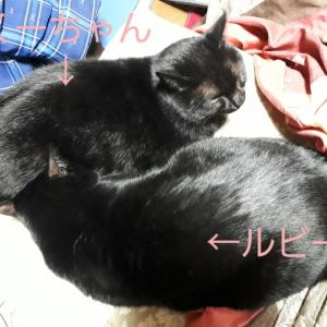 黒猫シスターズ