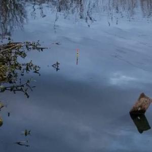 真冬の鯉釣り坊主