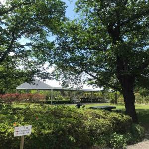 5月はバラの咲く初夏のお庭で ガーデンYOGAリラックス
