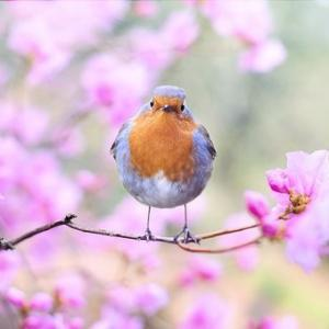 Équinoxe de printemps〜春に想いをはせる〜