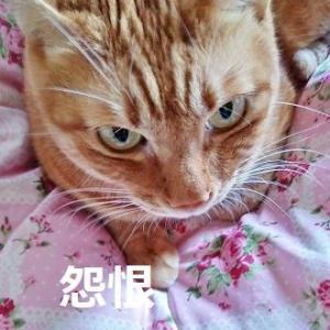猫の命がけのボイコット?