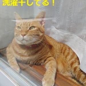 ミーちゃんの一日 猫は寝コ