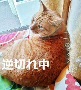 猫は肉食猛獣の元祖デス ガオ~!