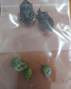 昆虫の樹脂標本を作ってみました