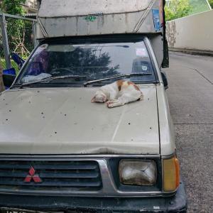 野良猫が幸せな国は人も幸せだと思う。