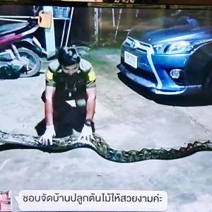 タイの民家でヘビが見つかったという話。