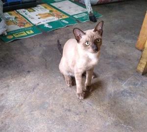 ソイLKメトロ前のクィッティアオと猫と【パタヤのタイ飯】