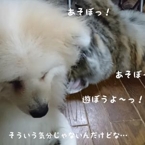すきすき♡