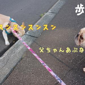 源くんのお散歩
