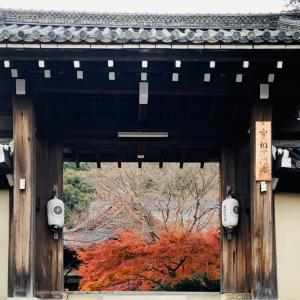 京都の旅はどこまでも〜!!お次はライトアップ〜〜!!