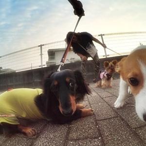 お散歩作戦!!
