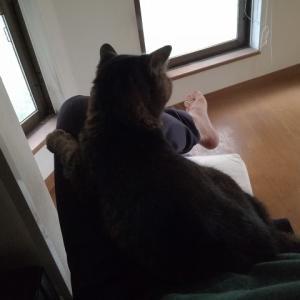 膝に猫タンポ