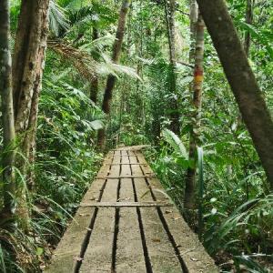 ペナン国立公園へ。マレーシアの虫事情について