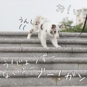 はじめての階段