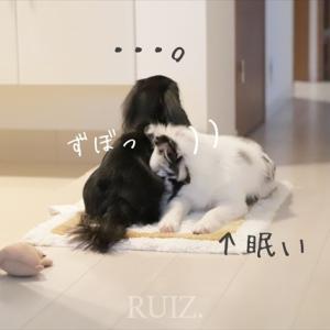 健気でひたむきな忠犬たち