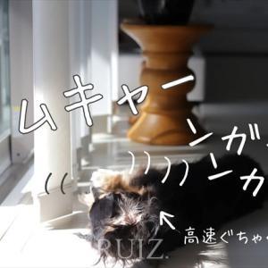 犬の行動心理学テスト byルイズ