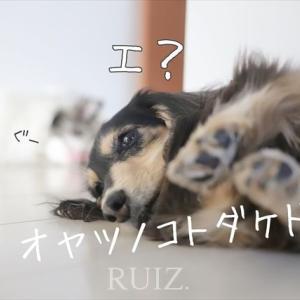 笑う犬の生活