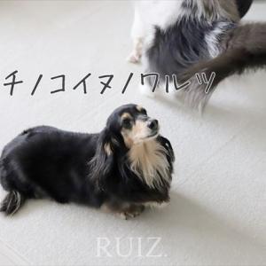 ルイズ家流の子犬のワルツ