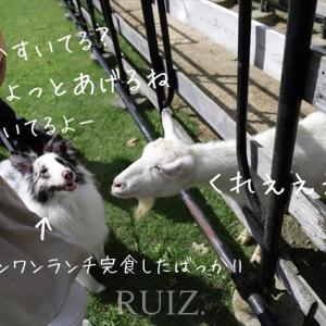 【淡路島】犬連れOK お次は淡路カントリーガーデンへ行ってきました。