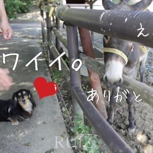 【淡路島】淡路カントリーガーデン 動物たちとルイズ家