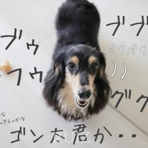 犬語の方が分かりやすい