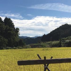 稲刈り     小さい田んぼの苦労
