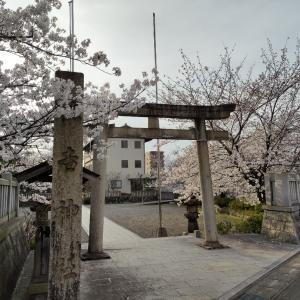 今日はさくらの日〜岐阜駅東・住吉神社の桜〜