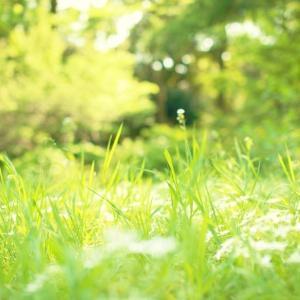 アスファルトの隙間などに生える雑草を見ると、そのたくましさに驚かされる。9月3日は「草の日」