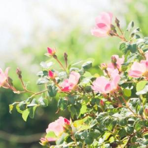 「花咲か夫婦」と評判の笑顔はじける夫妻が福岡県・大刀洗町にいる。一昨年の九州豪雨で家を失う