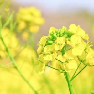 「大白蓮華」『巻頭言』 2017年(平成29年)3月号 ~希望の春へ勇気の劇を!~