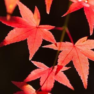 「梅が香に 初日さして 唱題す」。元旦の初勤行に際し、72歳の壮年の友が詠んだ。