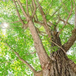 一本の木を見るために、彫刻界の巨匠・平櫛田中の美術館(東京都小平市)に足を運んだ。