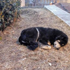 野良犬が多いジョージア、狂犬病の危険はあるの?