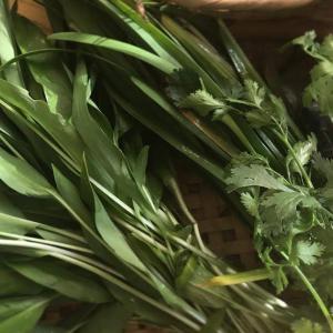 卯月の和野菜